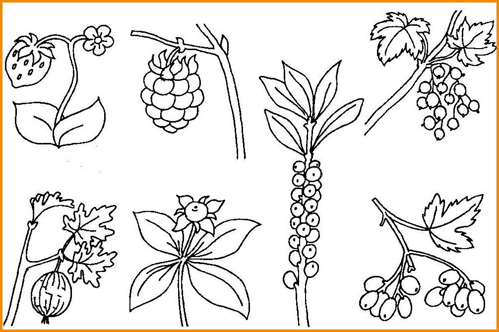 картинки разных ягод нарисовать было