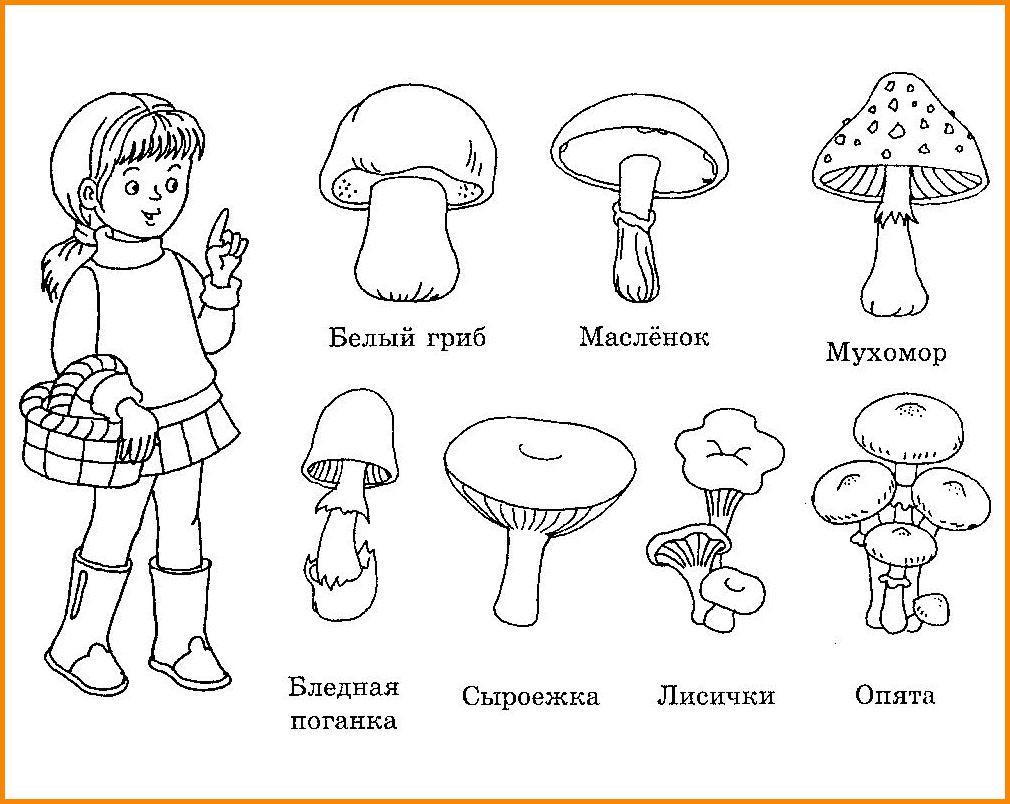 задание грибы картинки лежим