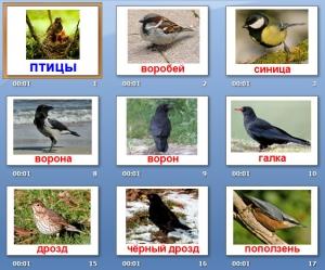 Картинки по запросу птицы для детей